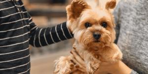 Plano de Saúde para Pet: 7 dicas de como escolher o melhor